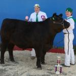 Reserve Supreme Champion Steer and 1st place in the Carcass Contest at Dixon May Fair